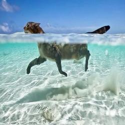 On a fait ses longueurs aujourd'hui ?🐠 . . . #catswimming #chatnageur #moustaches #chatdujour
