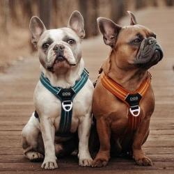 Nos harnais Dog Copenhagen n'ont jamais été aussi bien portés n'est ce pas ? 🤩🤩  Photo : @frenchies.in.crime  . . . #harnaischien #harnaischientendance #securitechien #comfortchien #frenchdogs