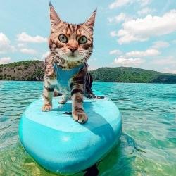 Marcelle en vacances c'est surf à gogo 🏄♀️🤙🏼 @justinewdm  . . . #chat #chatvoyageur #moustaches #vacanceschat