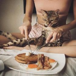 Bon petit dej' ❤️ @cats_onfilm  . . . #chat #chatdujour #petitdejchat #moustaches