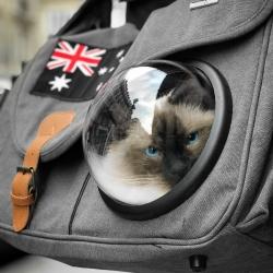 Duchesse prête à partir dans l'espace avec notre sac/besace Cosmonaute 🌚🌙💫 . . . #cosmocat #sacchat #sacdetransportchat #transportchat #ragdoll #moustaches #voyagechat #travelcat #cattraveler #chatparis #parisiancat