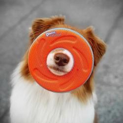 Léger, flottant et facile à lancer, le #zipflight est le frisbee 🥏 indispensable de vos entraînements 🐕  . . . #frisbee #frisbeechien #chuckit #dogfrisbee #entrainementchien #jouetchien #moustaches