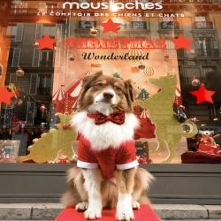 Madame Loyal de chez Moustaches 🎪 ⭐️❤️🤶  Notre costume de noël et notre noeud pap en sequins sont disponibles dans les liens sur l'image 🤩 . . . #costumenoëlchien #manteauchien #noelchien #accessoireschien #christmasdog #moustachestyle