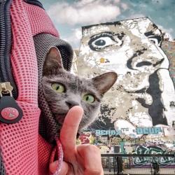 Maomay en vadrouille dans les rues de Paris dans son sac Maria 😻 Crédit : @julieaucontraire  . . . #chatvoyageur #chatvoyage #chatparis #chatparisien #sacadoschat #transportchat #moustaches